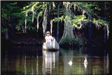 A man fishing from a canoe in the bayou